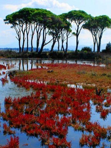 National Park Strofylia, Achaia (Peloponnese), Greece