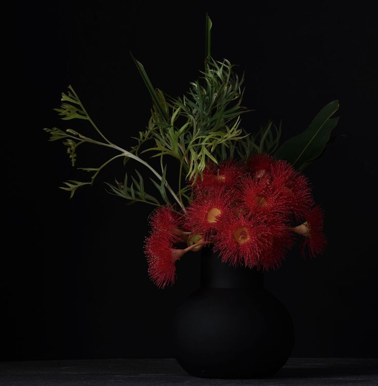 Don Urban Photography.  #flowers #botanicalphotography #nature #art #botanicalart #botanical #flora #photography #flowerporn #macro #floweroftheday #macrophotography #macroflowers  #botanicalart #flowersandmacro #botanicaminima #botanicalportrait #moodybotanicals #plantsonblack #flowersonblack #macro_vision #macro_perfection #darkbotanical #moodybotanicalportraits #botanicaetcetera