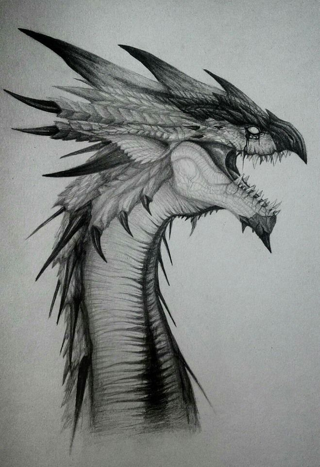 фото эскизы картинки драконов полная классификация, начиная