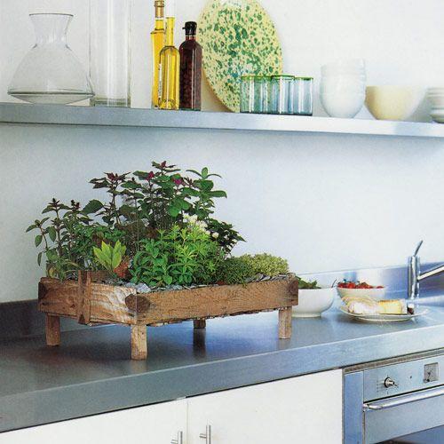 Kräutergarten in der Küche