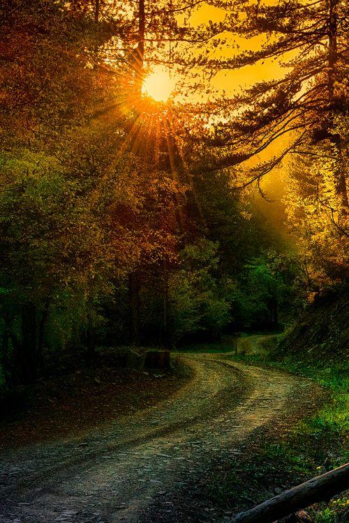 Autumn forest - The Vikos–Aoös National Park, Epirus, Greece  (by Christos Vladenidis on Flickr)