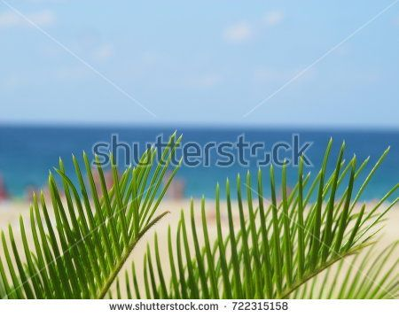 vacation background. Palm tree in the foreground, behind there is the expanse of the azure sea, and white sand with people
