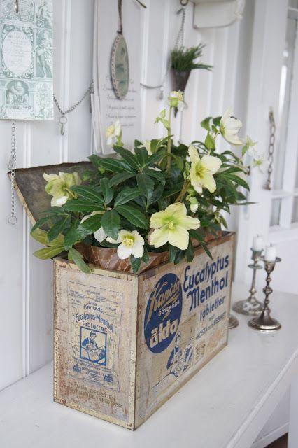Lantliv i Norregård: Floral
