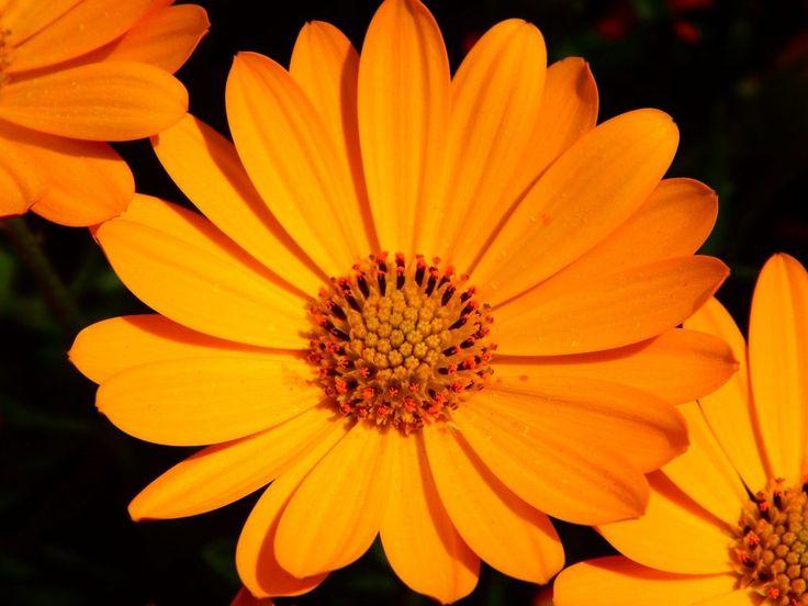Fiori commestibili: #calendula  #Fiori #commestibili #edible #flowers #rose #rosa #roses #yellow #giallo #pink #white #bianco #gnam #cibo #food #eatflowers #mangiarefiori #flowerpower #iloveflower #amoifiori