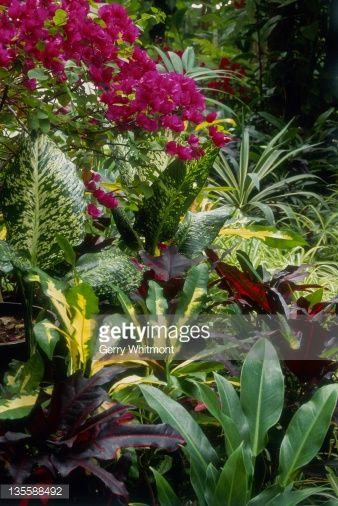 australian tropical garden - Google Search