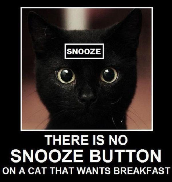 Dezi, every morning!