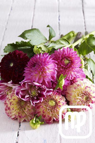Typologie: Blumen sind nicht nur schön anzuschauen, jede von ihnen hat auch eine wunderbare Bedeutung. Welche Blume zu Ihrem Sternzeichen passt, erfahren Sie hier...