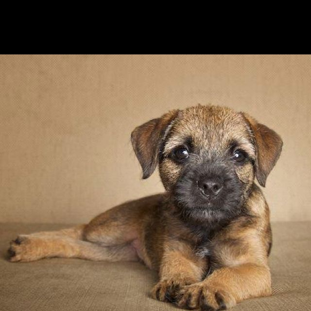 (s)he's cuteeeeeee!!!! I want a puppy for my 25th birthday! :)