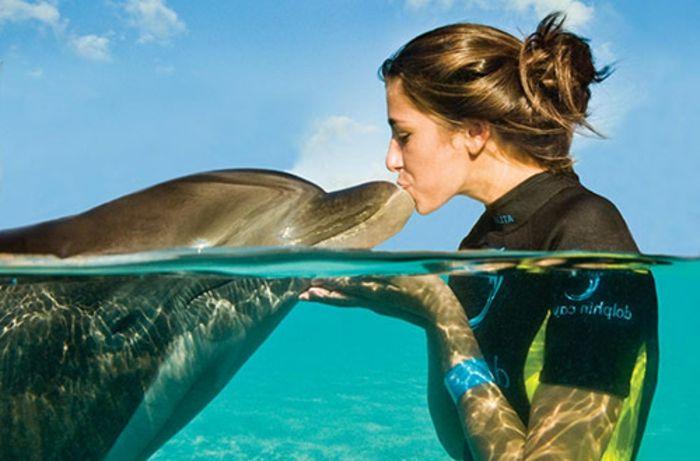 Rencontre avec les dauphins rêver à faire un nage