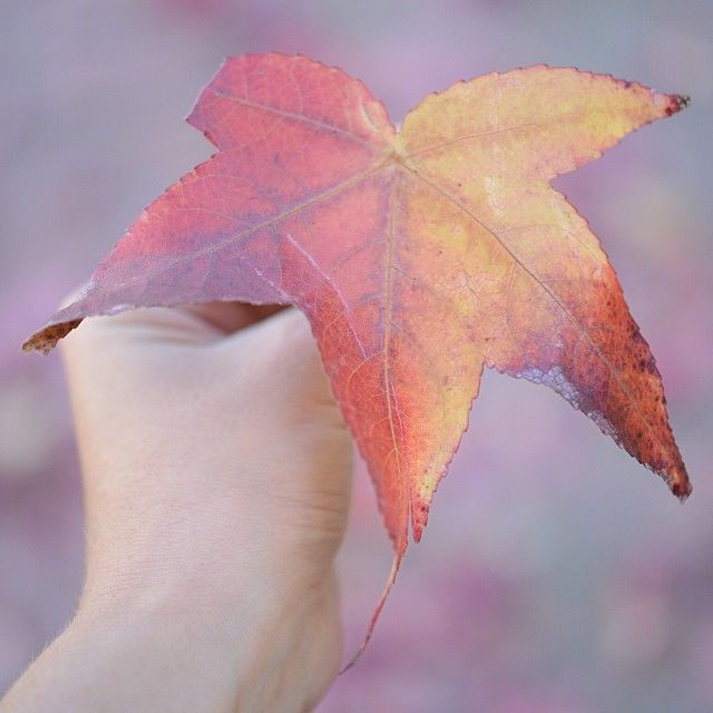 Savoring the colors of fall