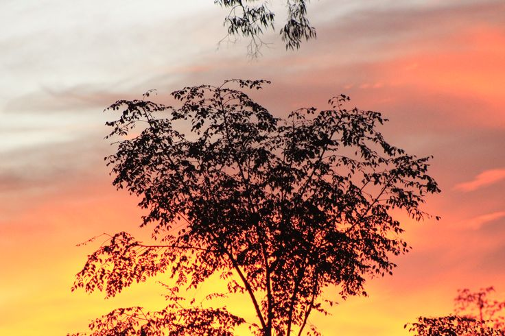 white cedar sunset
