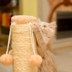 Ideas for making your kitty his very own kitty condo or scratching post.