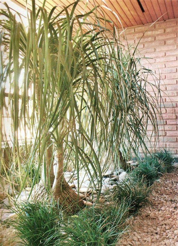 23 best plantas de sombra images on pinterest shade - Planta pata de elefante ...