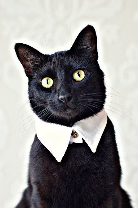 Today's style award goes to this classy cat.