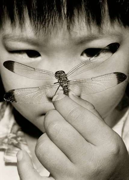 "Robert Holmgren, ""Dragonfly""~♛"