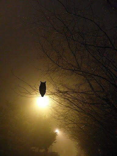 Image result for silhouette of an swooping owl against a lopsided moon and trees