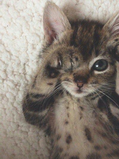 ,este gatito esta super bonito