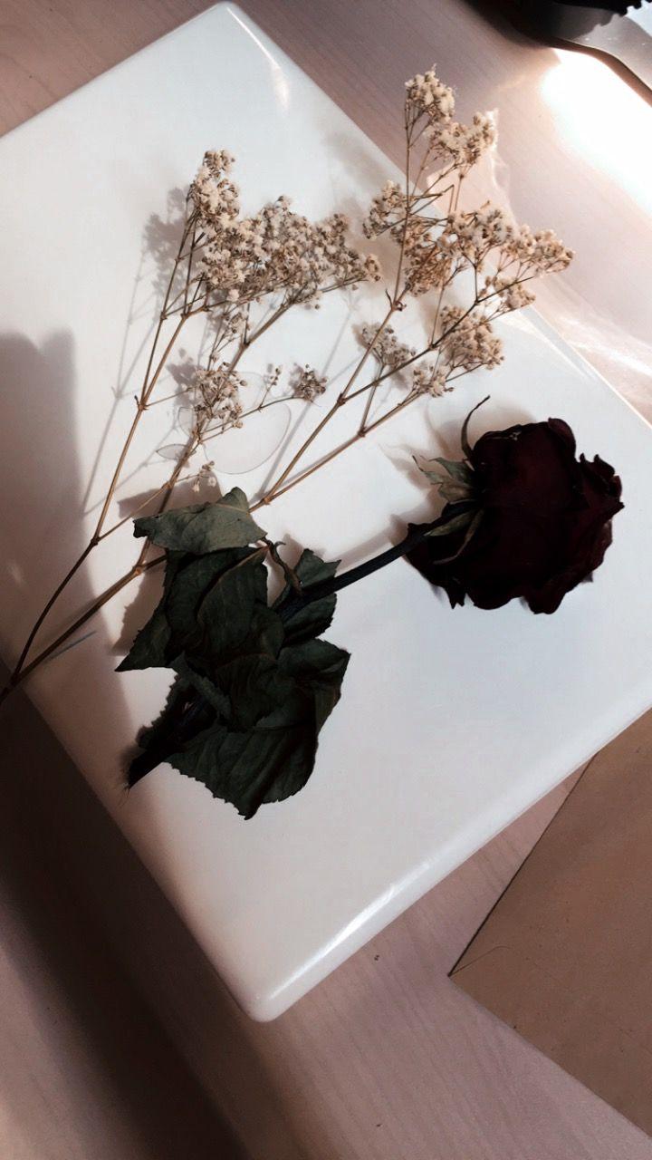 Pin Oleh Samar Naal Di Photography Bunga Bunga Kering