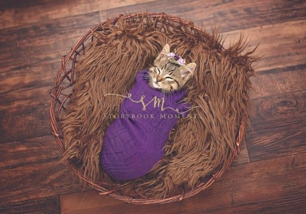 The kitty, named Elsa, was adopted by Cassie Borcherding of Missouri, her husband, and her four kids. | This Family Did A Newborn Photo Shoot With Their Kitten And It's Positively Perfect