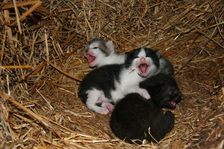 ¿Por qué los gatitos bebés son panzones? | Muy Fitness