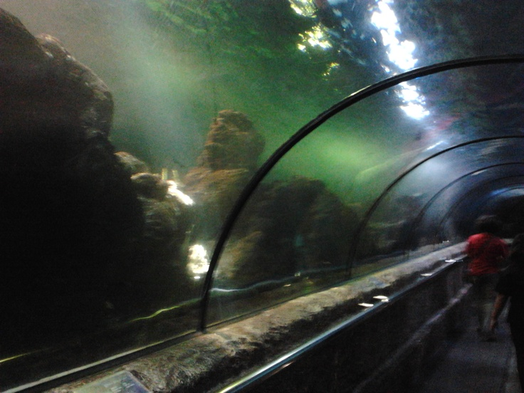 Sea World Ancol, North Jakarta