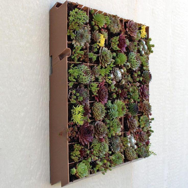 Best 25 outdoor living ideas on pinterest backyards for Living wall planter
