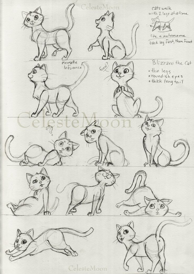 22 Best Cat Character Design Images On Pinterest