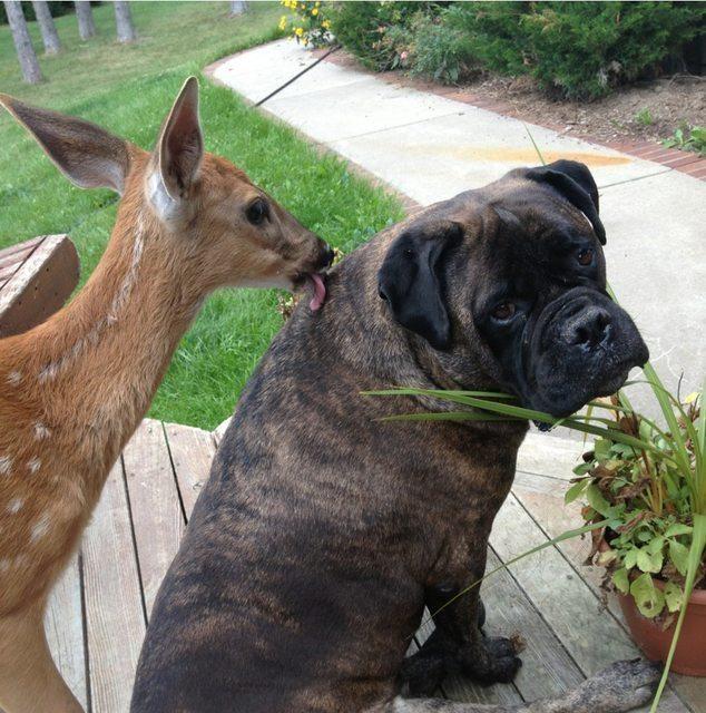 Esses animais não são só fofinhos, eles também são muito engraçados.