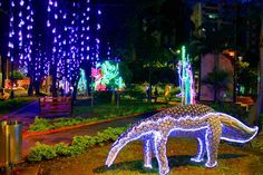 La navidad ya llegó a nuestra Ciudad Bonita