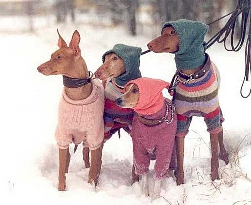 Pink hood looks to be a Basenji