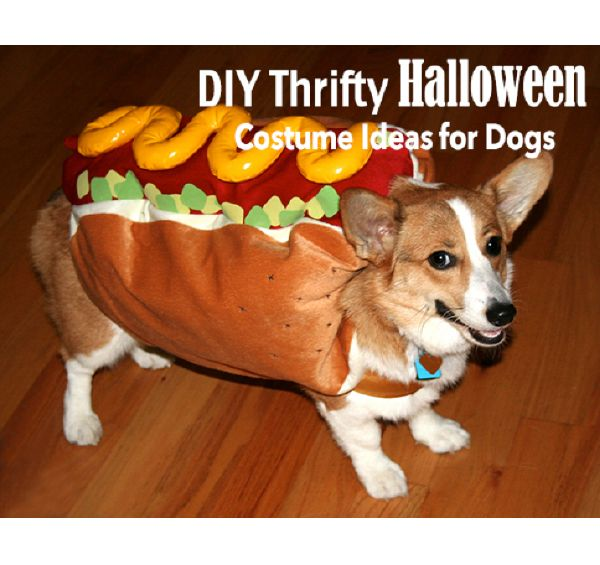 DIY Thrifty Halloween Costumes - for Dogs ! How cute is this?