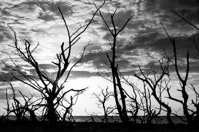 Tree silhouettes at Cayo Levisa, by Franck Vervial, via Flickr