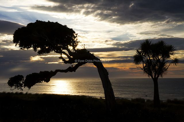 Tree silhouette - Coastal Wairarapa   © Elyse Childs Photography