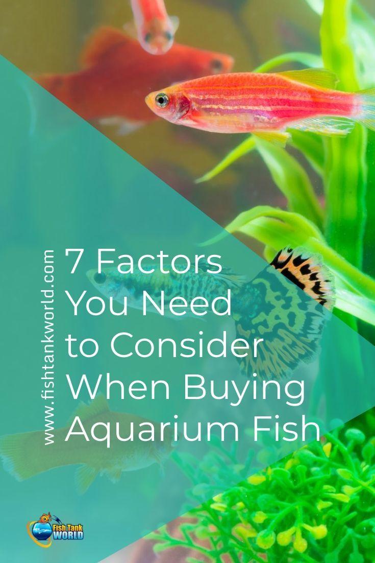 7 Factors You Need To Consider When Buying Aquarium Fish Aquarium Fish Pet Fish Fish Care