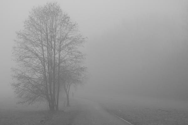 Forest trail which is lost in the fog on a cold and foggy morning in Germany