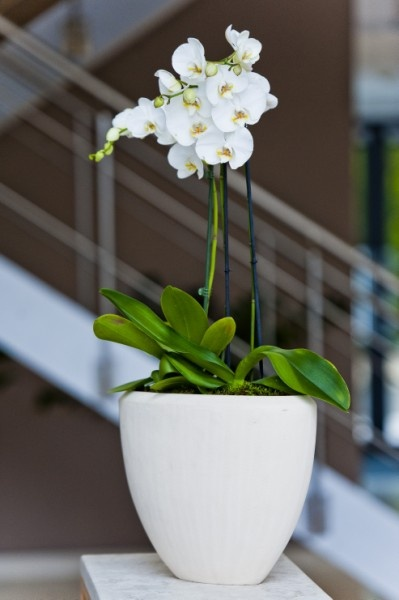 Orchid display in shiny white bowl reception Swindon