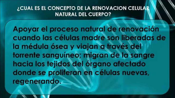 Funcion de las Celulas Madre Adultas y StemEnhance *CONTACTAME PARA SABER MAS: julianc.d16@gmail.com (57)3003462190