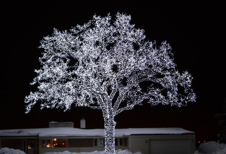 THE tree in bloomington, MN. always feels like home when i see it.