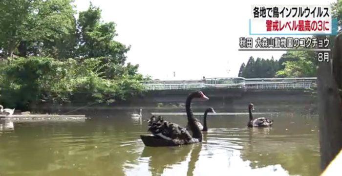 El Ministerio del Medio Ambiente (ENV) emitió alerta al encontrar el virus de la influenza en aves migratorias.