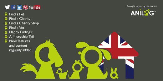 Pet Adoption UK Twitter Header