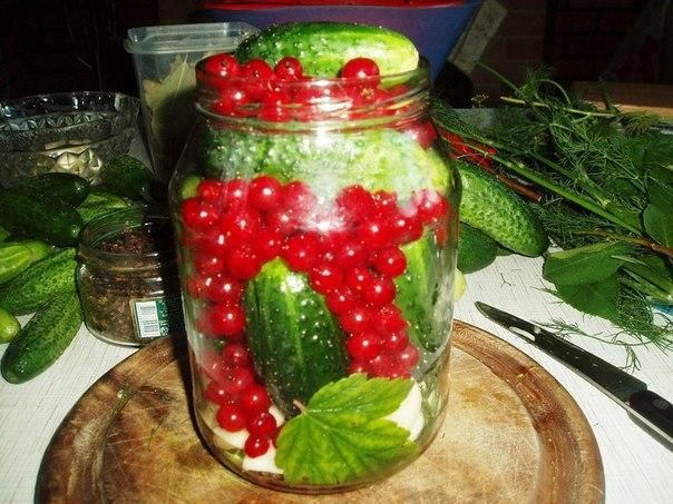 Cucumbers with red currants. Recipe: http://wonderdump.com/cucumbers-with-red-currants/