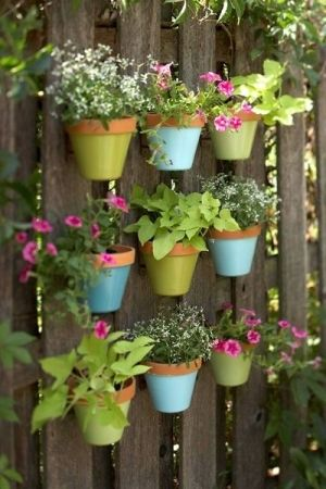 Flowers Planted In Colorful Ceramic Pots And Hanged On A Wooden Wall!