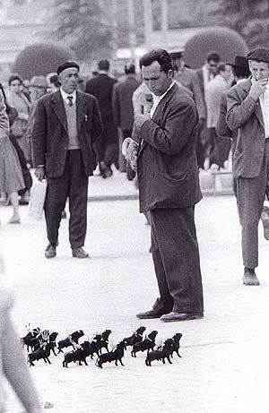 Plaza de las Ventas (Madrid) 1963 La manada de estereotipos patrios resulta menos peligrosa a escala reducida. La bravura del protagonista anónimo de la lidia ha llamado la atención de este espectador taurino en las proximidades de la plaza. El torito lucirá glorioso sobre el televisor bajo una alfombrilla de croché o ganchillo. La época en que -por prescripción dictatorial- la fiesta taurina, el fútbol y el boxeo saciaban las ansias de diversión de los españoles, generaba imágenes como…