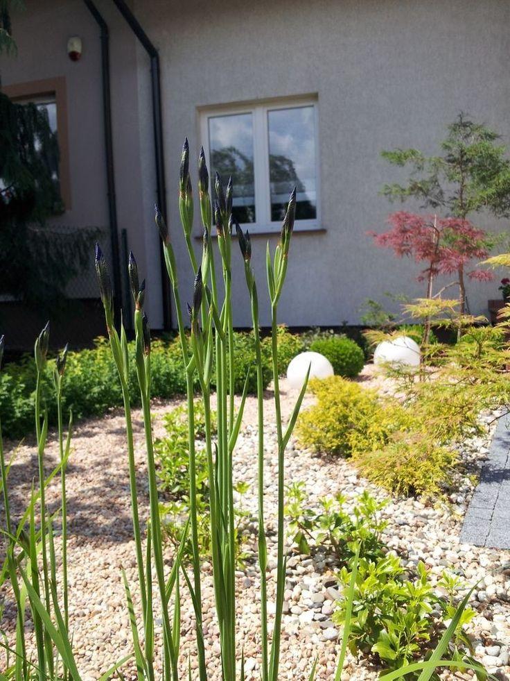 """Japoński"" zakątek - #miejski #ogród frontowy ""Japanese"" corner - #urban #front #garden"