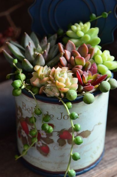 So beautiful, these tiny arrangements of succulents.