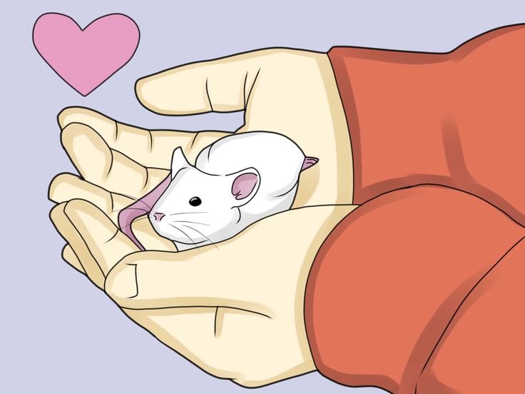 How to take care of your pet mouse