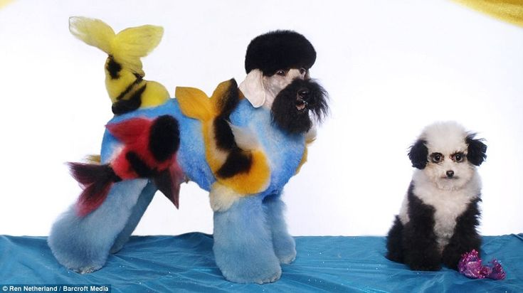 Dogs sculpted into works of art for extreme grooming contests