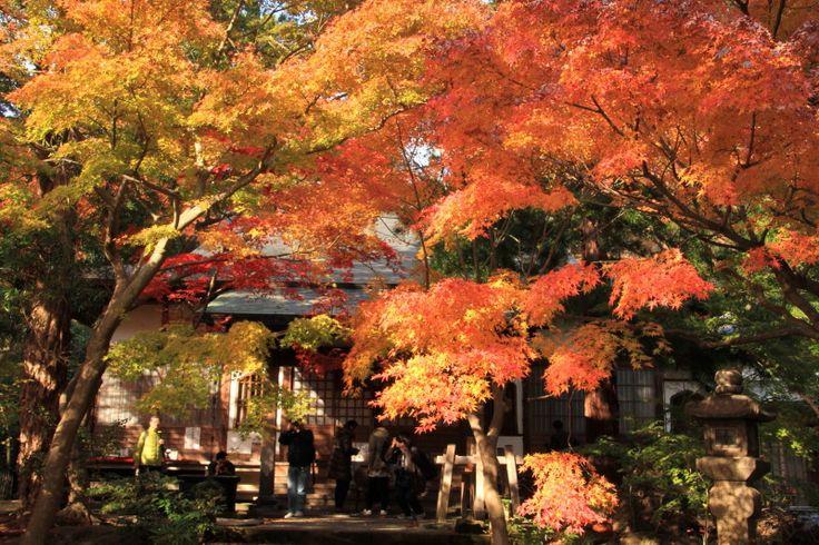 kamakura#鎌倉#覚園寺#紅葉#参拝ツアー#