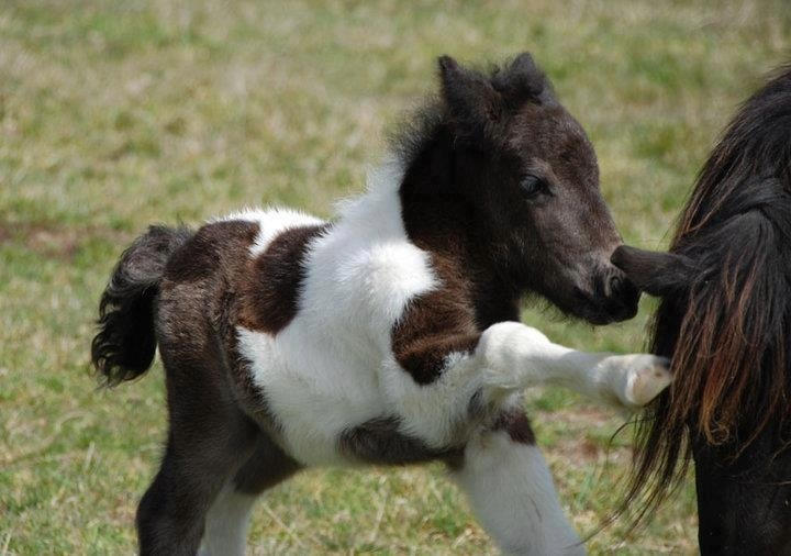 very cute foal
