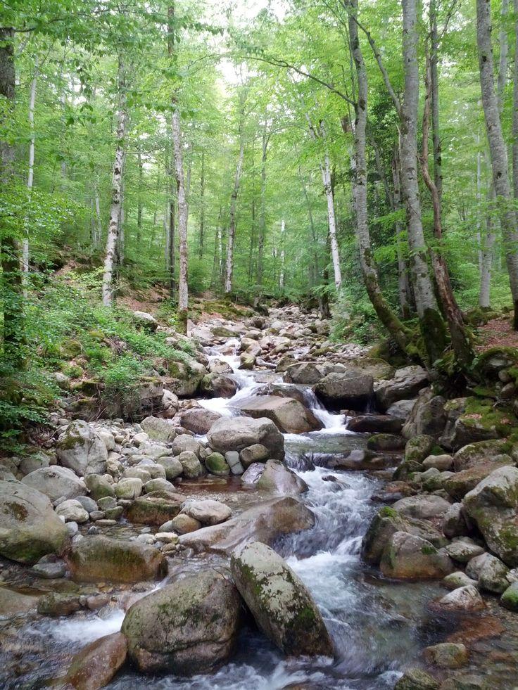 Au coeur de la forêt de Vizzavona...